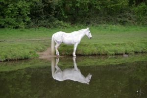 White Horse by rainbowphotos