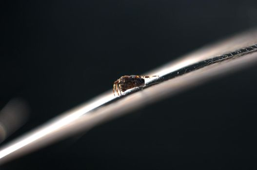 floating spider by dimibsd