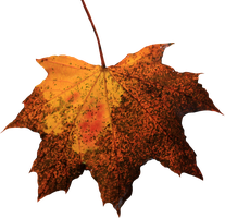 Leaf PNG 04 by Thy-Darkest-Hour
