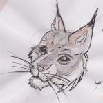 Khajiit head study by awrah