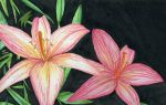 a pair of lillies by tequilla56