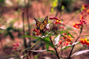 My favorite Butterfly by 904PhotoPhactory