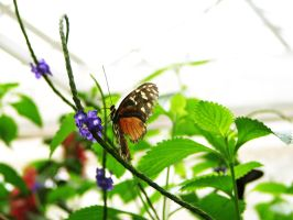butterfly 25 by Pagan-Stock