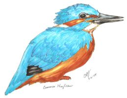 Alcedo atthis -Finished by BarryChoppa