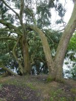 Arboreal Love Making By Lake - University of Essex by SrTw