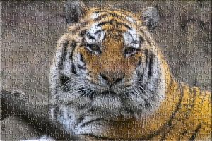 Tiger puzzle effect By ShadowTutorials by zarodas