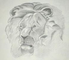 Lion Sketch by TheSleeperAwakes