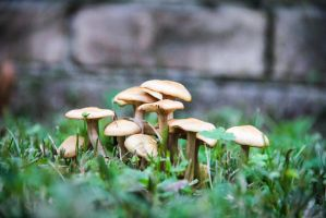 Little happy Shrooms by itzShanon