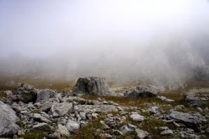 Fog and Rocks by ALP-Stock