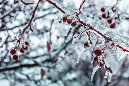 Iced Berries by TimeWillDefineUs