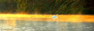 Far away swan sliding on the golden lake by Cloudwhisperer67