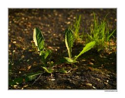 The Ground by rici66
