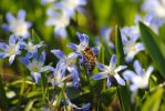 Flower and bee by Relphien