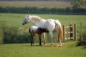 Mare and Foal 2 by candigal