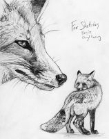 Fox Sketch by silvercrossfox