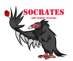 Socrates the Turkey-Vulture 02 by TheSleeperAwakes