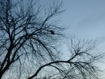 dead trees captivate my eyes by capricious23pictures