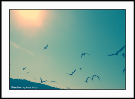 Freedom by BetoGDL1