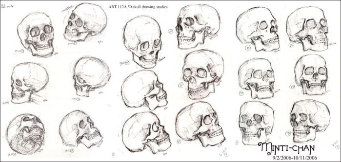 ART112A - Skull Study by gem2niki