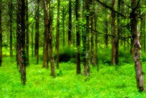 dreamy forest by kittenstyle