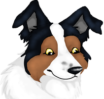 Border Collie by luckyferret06