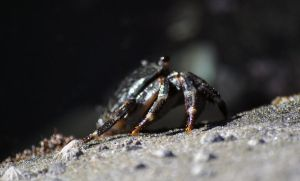 Sideways crab by fosspathei