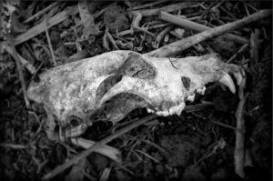 Skull By Fauxtaugrephe-d1f2all by Markhughes1966
