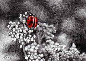 Lady Bird ACEO by youngmoons