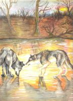 Wolves' Reflection by forensicfox