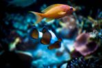 nemo with friend by RottenHeart