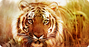 eye of the tiger by ARTGoddis