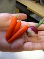 WIP 1-4 Miniature Turnip and Carrots by Snowfern