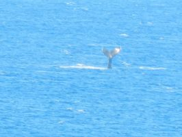 Whale of a Tail by sailormarsgirl