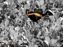 Orange Butterfly by FernandoMorato
