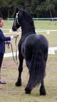 STOCK - Friesian Show 2012-124 by fillyrox