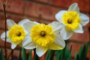 Faces of Spring by jlente