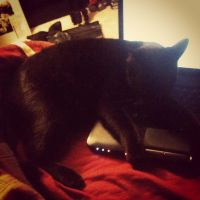 Cat's laying on my laptop by 3Rockstar3