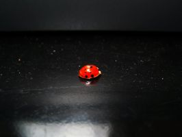 Lady bug by beanphotogi