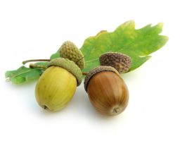 Multicolored Acorns 4673341 by StockProject1