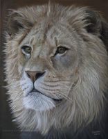 Lion Portrait by Vanory