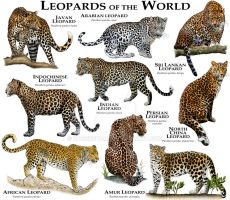Leopards of the World by rogerdhall