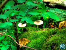 forest park mushrooms three by DCRIII