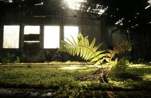 Fern in a Hall by pacifier75