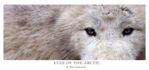 EYES OF THE ARCTIC by Yair-Leibovich