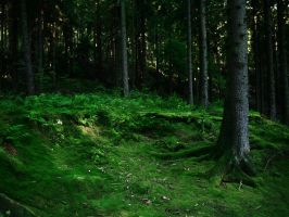 The valleys of Lothlorien 5 by Dragoroth-stock