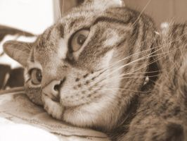 Gabby in Sepia by dhunley