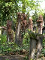 Old Jewish Cemetery in Wroclaw by OkeMani