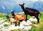 Kings of the Hill by AljoschaThielen