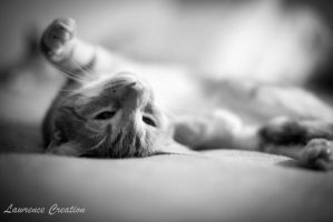 Sprawled out by LawrenceCreation