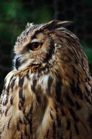 Wise Guy by faisalh